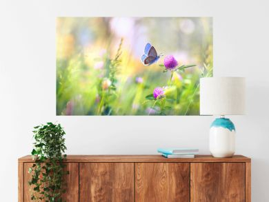 Wild flowers of clover and butterfly in a meadow in nature in the rays of sunlight in summer in the spring close-up of a macro. A picturesque colorful artistic image with a soft focus.