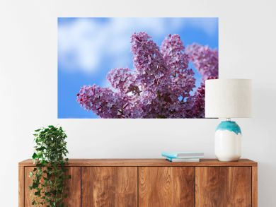 Branch of blossoming lilac isolated on blue sky.