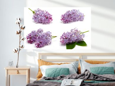 Lilac branch set isolated on white background