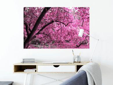 Mysterious autumn magnolia garden