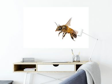 A close up of flying bee isolated on white background