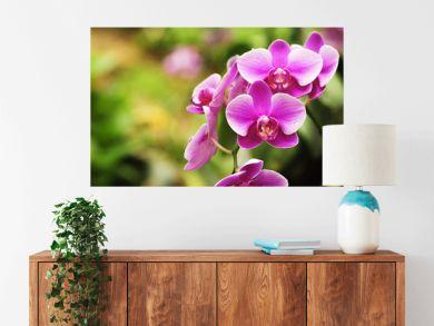 beautiful orchid flower blooming at rainy season