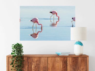 Andean flamingos in Laguna Chaxa, Atacama salar, ChileAndean flamingos in Laguna Chaxa, Atacama salar, Chile