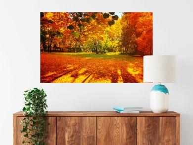 Fall landscape - fall trees in sunny fall park lit by sunshine, sunny fall landscape in soft sunlight. Fall landscape scene