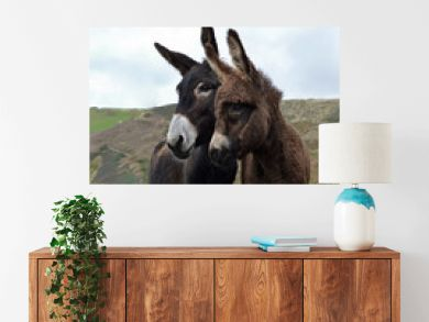 A mother donkey and her baby donkey in a field, in the countryside