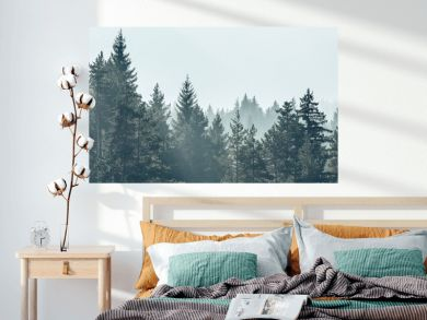 Pine trees forest stylized silhouette photo banner background