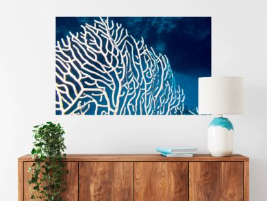 Coral reef with gorgonian on the bottom of tropical sea