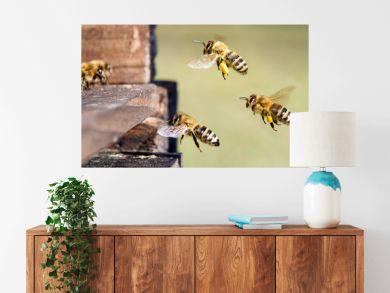 Honigbienen am Bienenstock