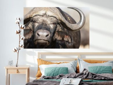Portrait of african cape buffalo