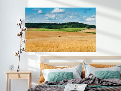 big panoramic view of landscape of wheat field, ears and yellow and green hills