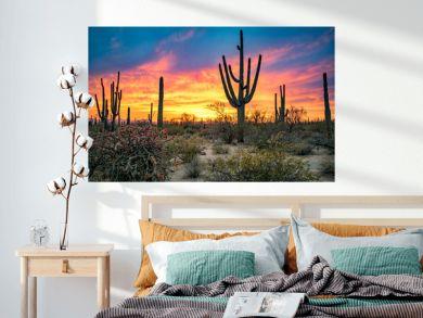 Dramatic Sunset in Arizona Desert: Colorful Sky and Cacti/ Saguaros in Foreground  - Saguaro National Park, Arizona, USA