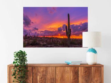 Cactus At Sunset in Arizona