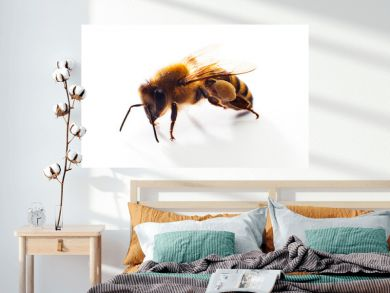 Honey bee isolated on the white background.