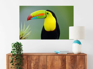 Wildlife from Yucatán, Mexico, tropical bird. Toucan sitting on the branch in the forest, green vegetation. Nature travel holiday in central America. Keel-billed Toucan, Ramphastos sulfuratus.