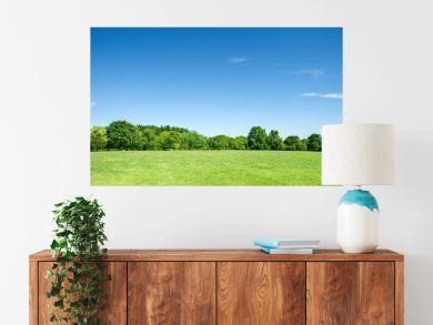 青空と草原と新緑の樹