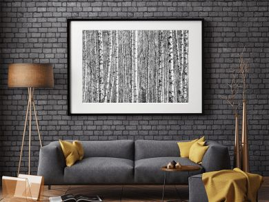 Birch grove on a sunny spring day, landscape banner, huge panorama, black-and-white