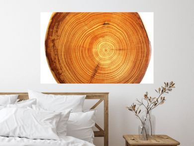 beautiful cut of tree