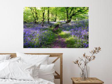 Blue bells forest