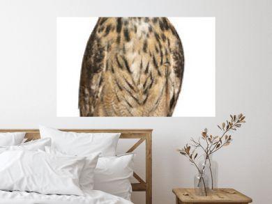 Eurasian Eagle-Owl, Bubo bubo, a species of eagle owl