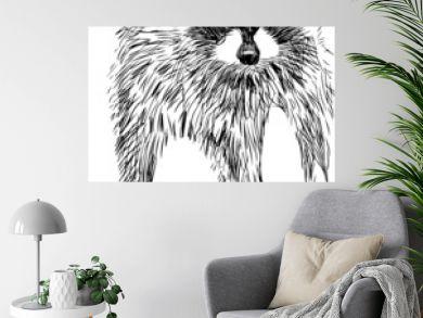 surprised raccoon