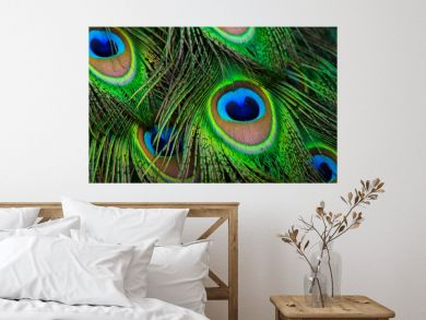 Peacock feathers eyes pattern