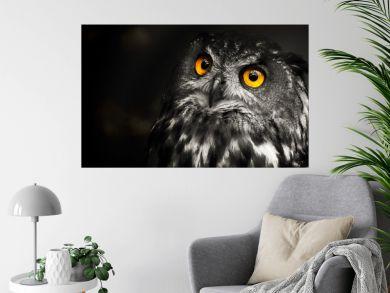 Portrait black and white Eurasian eagle-owl, owl