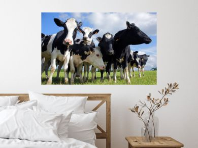 Holstein cows cattle