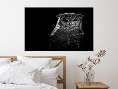 african owl - black and white image
