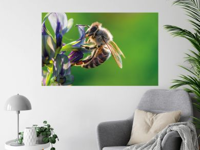 My dream lady - Small bee on a purple clover blossom in the evening sun