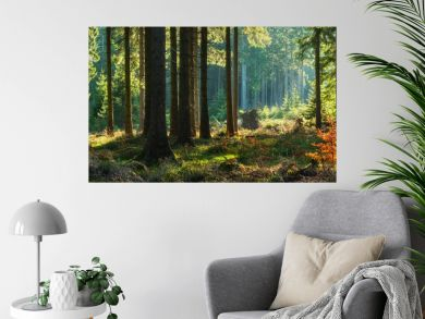 Panoramic Sunny Forest in Autumn