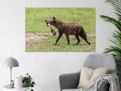hyena with bone