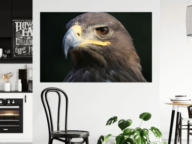 eagle portrait with natural background;