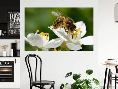 abeille dans le jardin