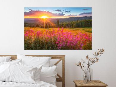 Wildflower sunset in the Colorado Rockies, USA.