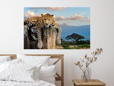 Leopard sitting on a tree