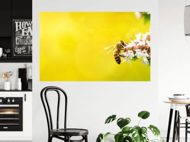 A wild bee visits the flowers of oregano (Origanum vulgare)