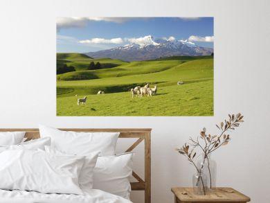 New Zealand Scenery