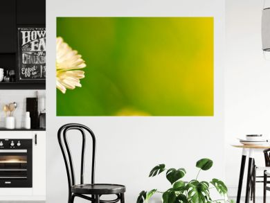 nature images - daisy flower green photo with copy space