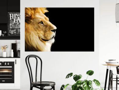 Lion portrait with copy space on black background