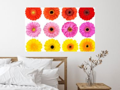 Collection of Fresh Gerbera Flowers Isolated on White