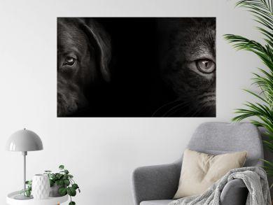 dark muzzle labrador dog and cat Scottish