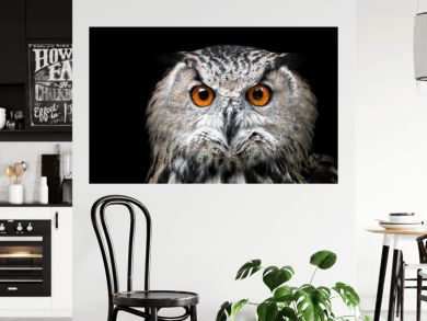 Portrait of a Beautiful Owl. Owl on black background