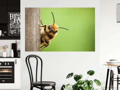 Peek-a-boo bee close up
