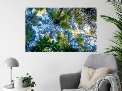 Giant ferns in redwood forest, Rotorua, New Zealand