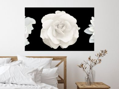 3 surreal exotic high quality white flowers macro isolated on black. Greeting card objects for anniversary, wedding, mothers and womens day design
