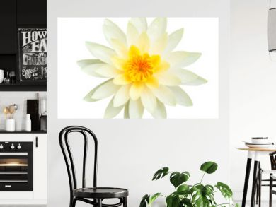 White lotus flower isolated on white background., This has clipping path.