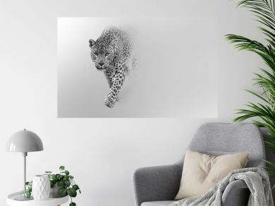 leopard walking out of the shadow into the light digital wildlife art white edition