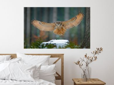 Eagle owl landing on snowy tree stump in forest. Flying Eagle owl with open wings in habitat with trees, bird fly. Action winter scene from nature, wildlige. Owl, big wingspan. Autumn snow forest.