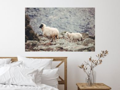 sheep with lamp in the mountains