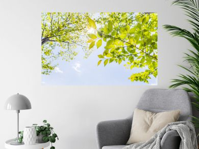 新緑の木々